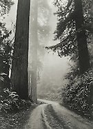 North Coast Redwoods, Winter