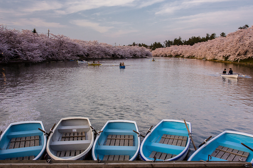 Rowing boats are ready for any tourist who wishes to enjoy the cherry blossoms by rowing in the lake.