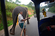 Mahout and elephant walking on the road, view from inside a tuk tuk, Sri Lanka