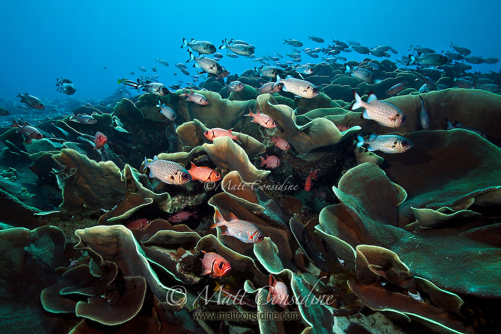 Ulong Channel is an exciting drift dive along a valley, one side of which has steep banks of lettuce coral and sheltering fish. (Photo by Matt Considine - Images of Asia Collection)