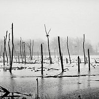 Almond marsh forest preserve in Wildwood, Illinois. Black and white fine art photograph.