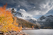 Fall aspens under Sierra peaks from South Lake, Inyo National Forest, Sierra Nevada Mountains, California USA
