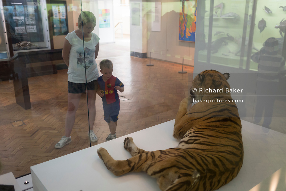 A young boy with his mother learns about the world of nature with a stuffed lion, on 24th August 2017, at the Horniman Museum, Forest Hill, London, England.