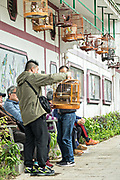 Chinese men socialize with their songbirds at the Yuen Po Street Bird Garden in Mong Kok, Kowloon, Hong Kong.