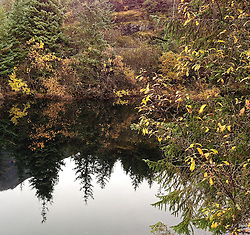 Fall foliage is reflected in a small pond near Mendenhall Lake and the Mendenhall Visitor Center just outside Juneau, Alaska.