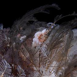 Hermit Crab, unknown