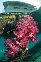 The underside of a floating dock office becomes a thriving Soft Coral Garden<br /> <br /> Shot in Indonesia