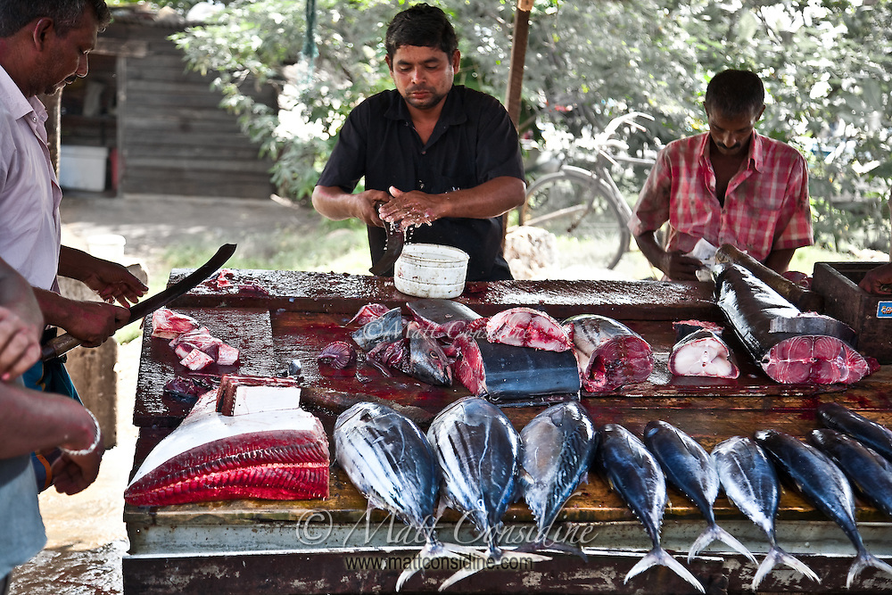 The fish sell quickly as buyers crowd around.<br /> (Photo by Matt Considine - Images of Asia Collection)