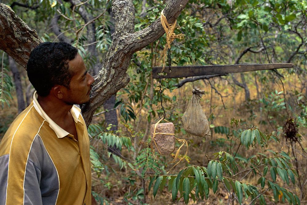 Rocks used by Brown Capuchin Monkeys to crack palm nuts <br />Cebus apella<br />Piaui State,  Cerrado Habitat<br />BRAZIL.  South America