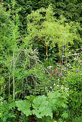 Border including Salix erythroflexuosa