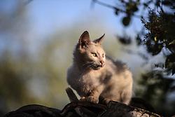 May 2, 2017 - Artaki, Euboea, Greece - Semiwild cats life outdoor in Artaki on Euboea island, Greece on May 2, 2017. (Credit Image: © Wassilios Aswestopoulos/NurPhoto via ZUMA Press)