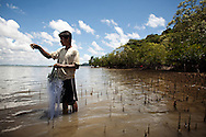 A moken fisherman lays a net next to a mangrove forest trying to catch crabs during a low tide, Phang Nga province, southern Thailand.