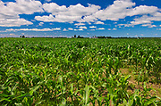Corn field and clouds, St. Armand, Quebec, Canada