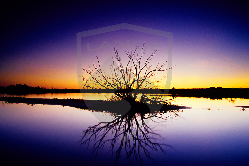 tree reflected in lake water with sunset light fading on the horizon taken in southern new mexico, near the town of roswell.