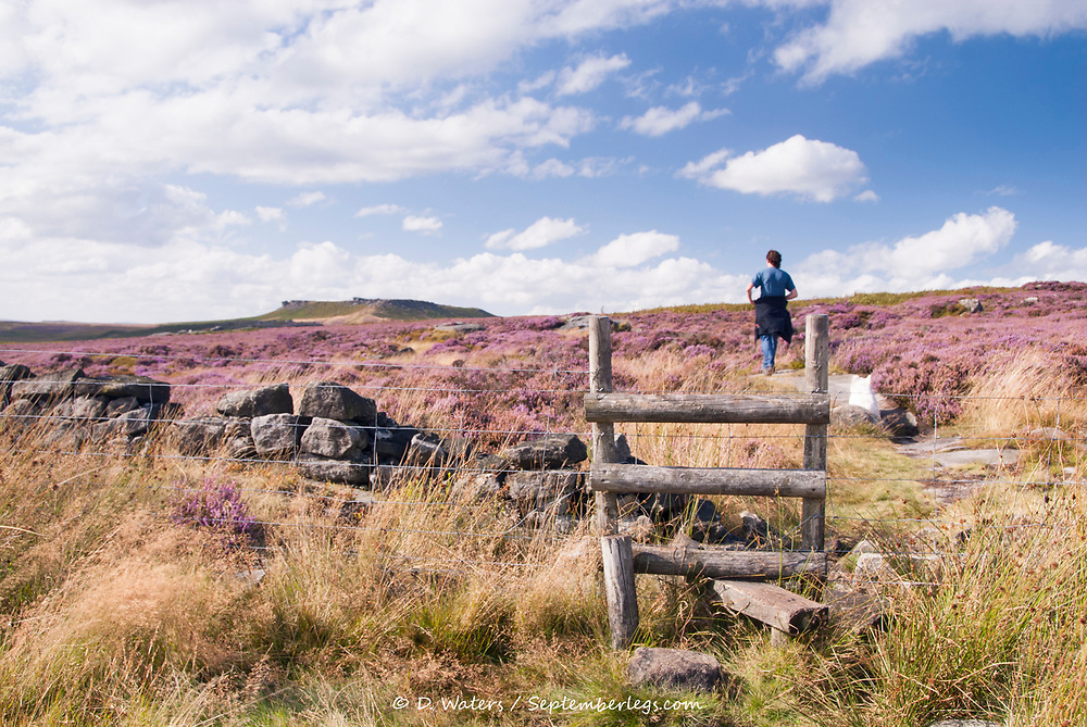 Derbyshire, UK: 28 Aug 2014: A stile gateway to a scenic landscape pink with moorland heathers in flower on 28 Aug in the Peak District