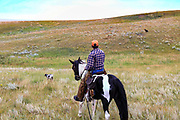 John Zeman, follows his German shorthairs Liza (left) and Louie, during a Montana horseback grouse hunt.