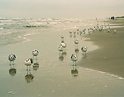"Flock of seagulls stopped at water's edge on the beach on South Padre Island, Texas. NOTE: Click ""Shopping Cart"" icon for available sizes and prices. If a ""Purchase this image"" screen opens, click arrow on it. Doing so does not constitute making a purchase. To purchase, additional steps are required."