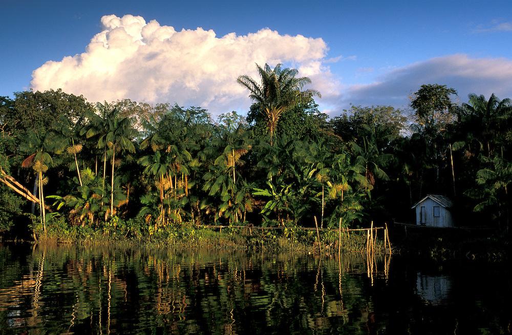 Amazon River at Ilha do Marajo, Amazon Delta, Amazonia, Brazil