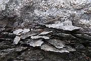 Eroding Shale Rock, Holbrook Island Sanctuary, Brooksville, Maine, US