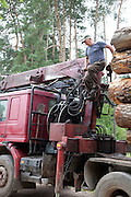 Polish trucker adjusting his load of logs. Zawady Central Poland
