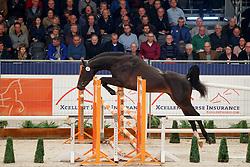 052, Klacid Of Cicero<br /> KWPN Stallionshow - 's Hertogenbosch 2018<br /> © Hippo Foto - Dirk Caremans<br /> 31/01/2018