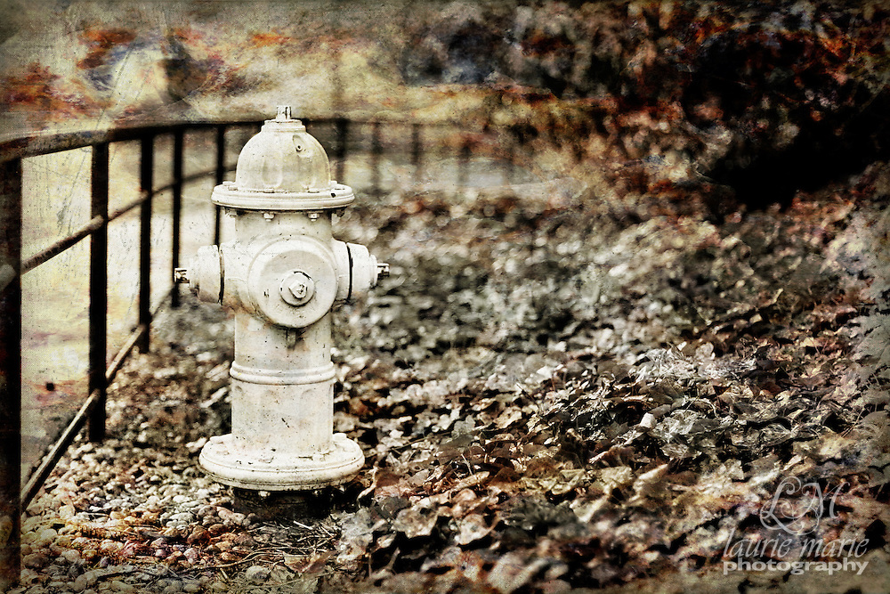 Fire hydrant in park - vintage