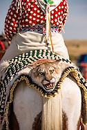 Crow Fair Parade, Woman, Cougar, Crow Indian Reservation, Montana