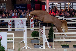 053, Rio vd Zwartbleshoeve<br /> BWP Hengstenkeuring -  Lier 2020<br /> © Hippo Foto - Dirk Caremans<br />  17/01/2020