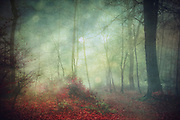 Mysitcal forest scene on a misty fall day - manipulated and textured photograph