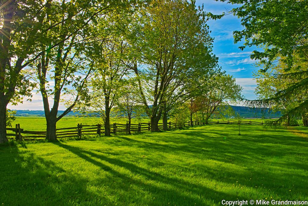 Shelterbelt trees and farmland, Kamouraska, Quebec, Canada