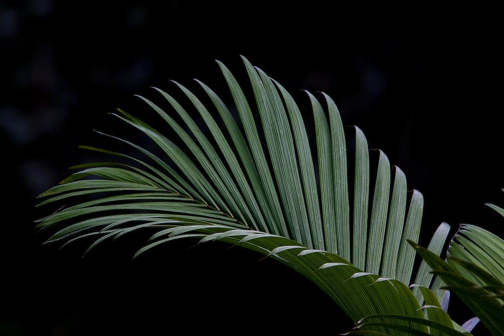 Parauapebas_PA, Brasil...Vegetacao da floresta Nacional dos Carajas, Para. Na foto detalhe de uma folha...Carajas National Forest Vegetation, Para. In the photo, detail of a leaf...Foto: JOAO MARCOS ROSA / NITRO