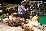 14 MARCH 2006 - PHNOM PENH, CAMBODIA: Daily life in Phnom Penh. PHOTO BY JACK KURTZ