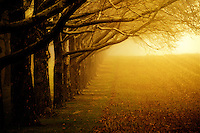 Lisa Johnston   lisa@aeternus.com   Tiwtter: @aeternusphoto  Sycamore trees in Center Valley, PA