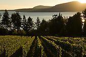 Vancouver & Gulf Island Wine
