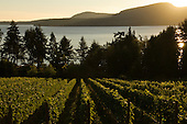 Vancouver & Gulf Island wine image library example