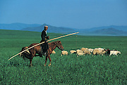 Nomad moving livestock<br /> to summer grazing area<br /> Northern Mongolia