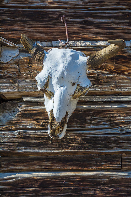 Cow skull on log cabin at Spring Creek Ranch in Paradise Valley, Montana.