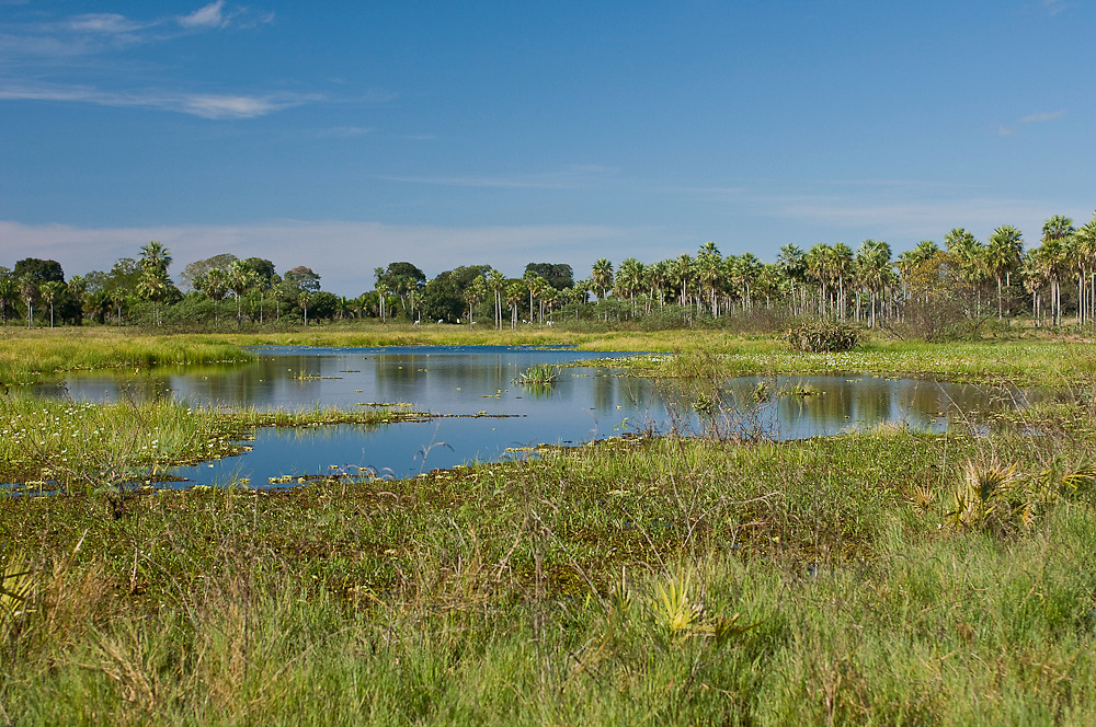 Small lake by the Transpantaneira Road in the Pantanal, Mato Grosso do Sul, Brazil.
