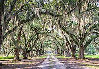 Tomotley Plantation Avenue of the Oaks.