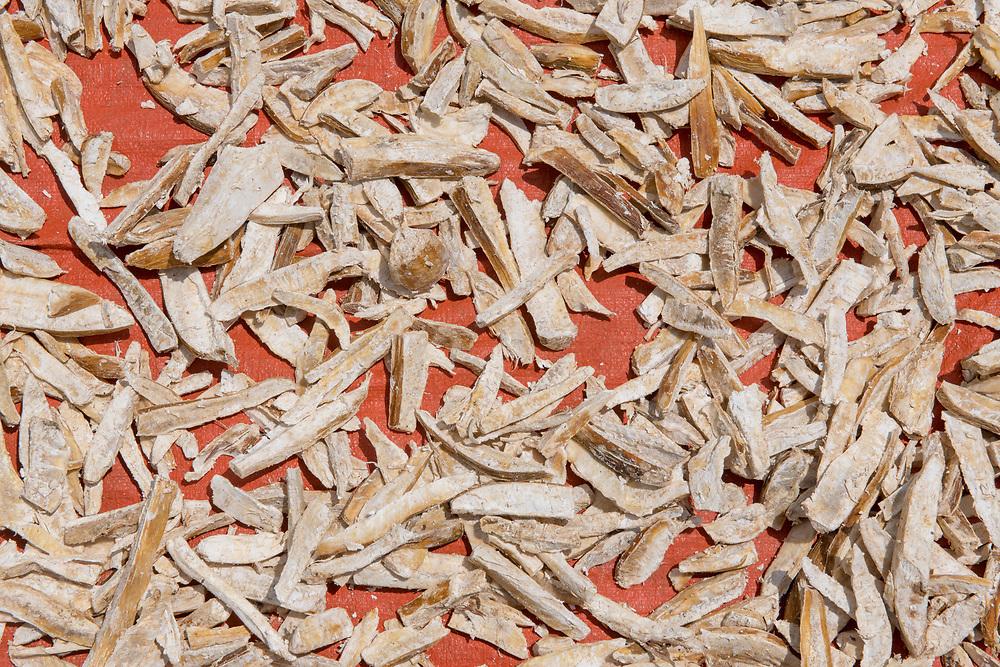 Drying Cassava (Manihot esculenta) in Ganta, Liberia