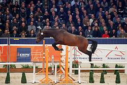 188, Kreator's Son<br /> KWPN Stallionshow - 's Hertogenbosch 2018<br /> © Hippo Foto - Dirk Caremans<br /> 01/02/2018