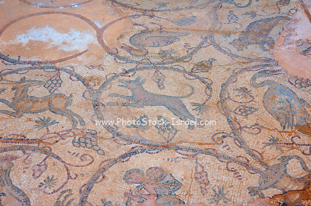 Israel, caesarea, a town built by Herod the Great about 25 - 13 BC, lies on the sea-coast of Israel Byzantine mosaic depicting animals and hunting scenes