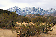 Mount Wrightson with snow seen from along the Arizona Trail in Gardner Canyon in the Santa Rita Mountains of the Coronado National Forest in the Sonoran Desert north of Sonoita, Arizona, USA.  Burned trees from past forest fires dot the mountainside.