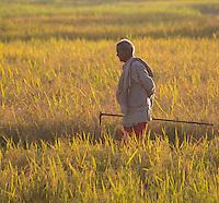 Man walking in rice fields holding a small plow, Terai region, Nepal