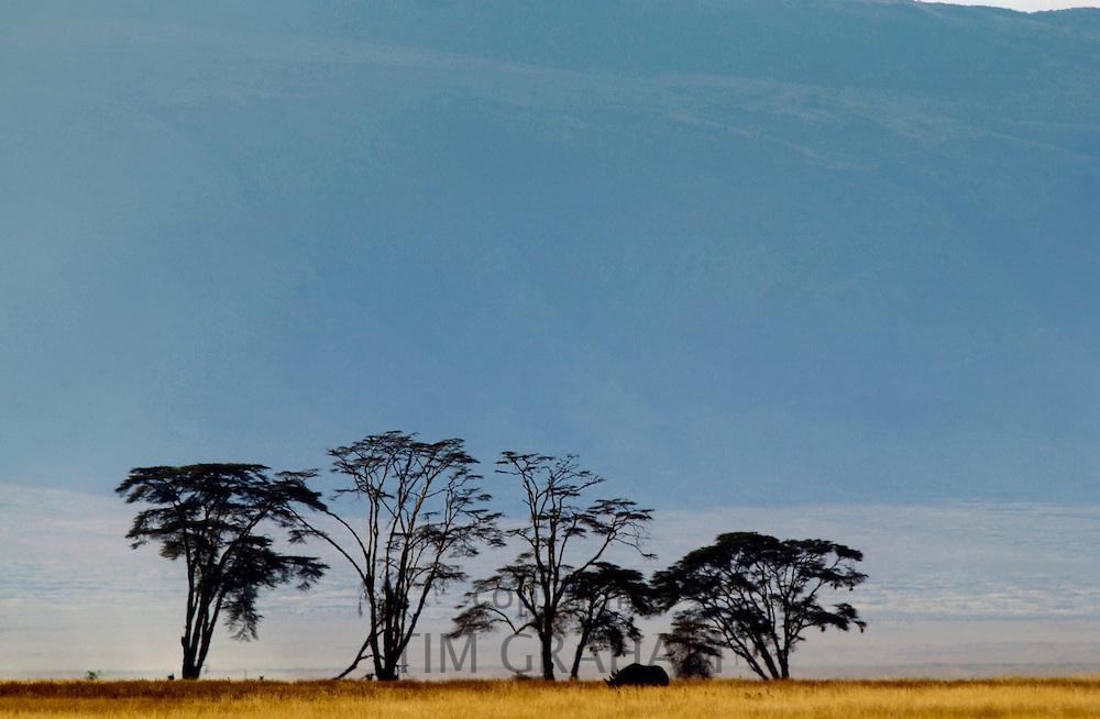 Black Rhinoceros with crater rim behind, Ngorngoro Crater, Tanzania, East Africa