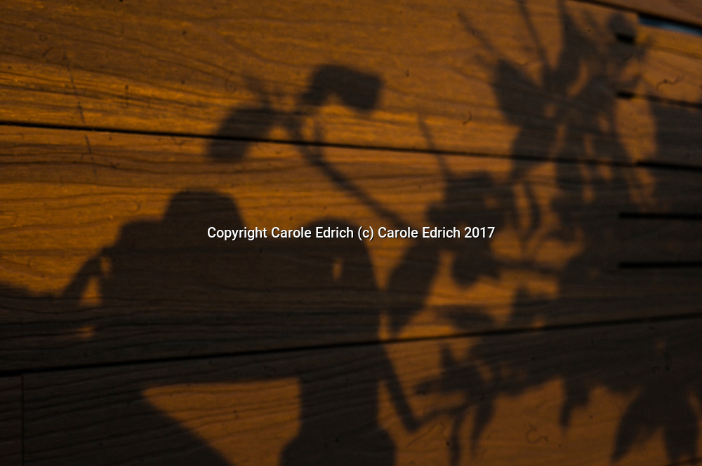 Shadow of camera with person's hand and shadows o plant on wood, on the roof of Nakar Hotel. (c) Carole Edrich 2017