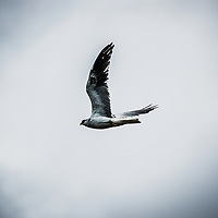 While taking a boat across Lake Arenal in Costa Rica I caught this image of a bird in flight.