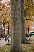 Fall Campus Beauty