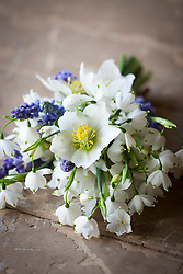 Hand tied bunch of spring flowers. Christmas rose (Helleborus niger), Grape hyacinths (Muscari), Snowdrops (Galanthus nivalis)