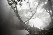 Early morning fog at the Living root bridges in Rawai, Mawlynnong, tourists come form all over india to cross the small river on this bridges that are handmade from the aerial roots of living banyan fig trees, by the Khasi people, 22 July 2016.<br />